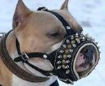 Leather PADDED MUZZLE - Royal Spiked Dog Muzzle for Amstaff