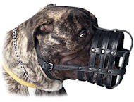 Leather Basket Dog Muzzle for my Bullmastiff