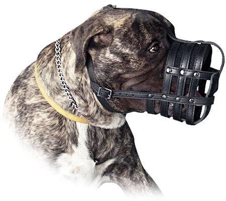 Leather Basket Dog Muzzle for my Bullmastiff