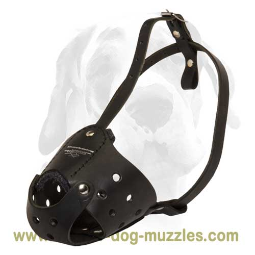 Large and medium breeds daily leather muzzle
