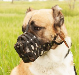 How to choose a Dog Muzzle