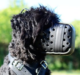 How to treat your pet's leather muzzle